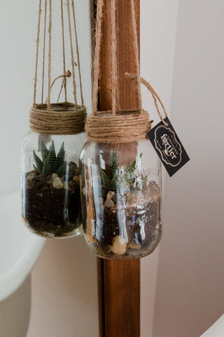 Terrarium en pot masson