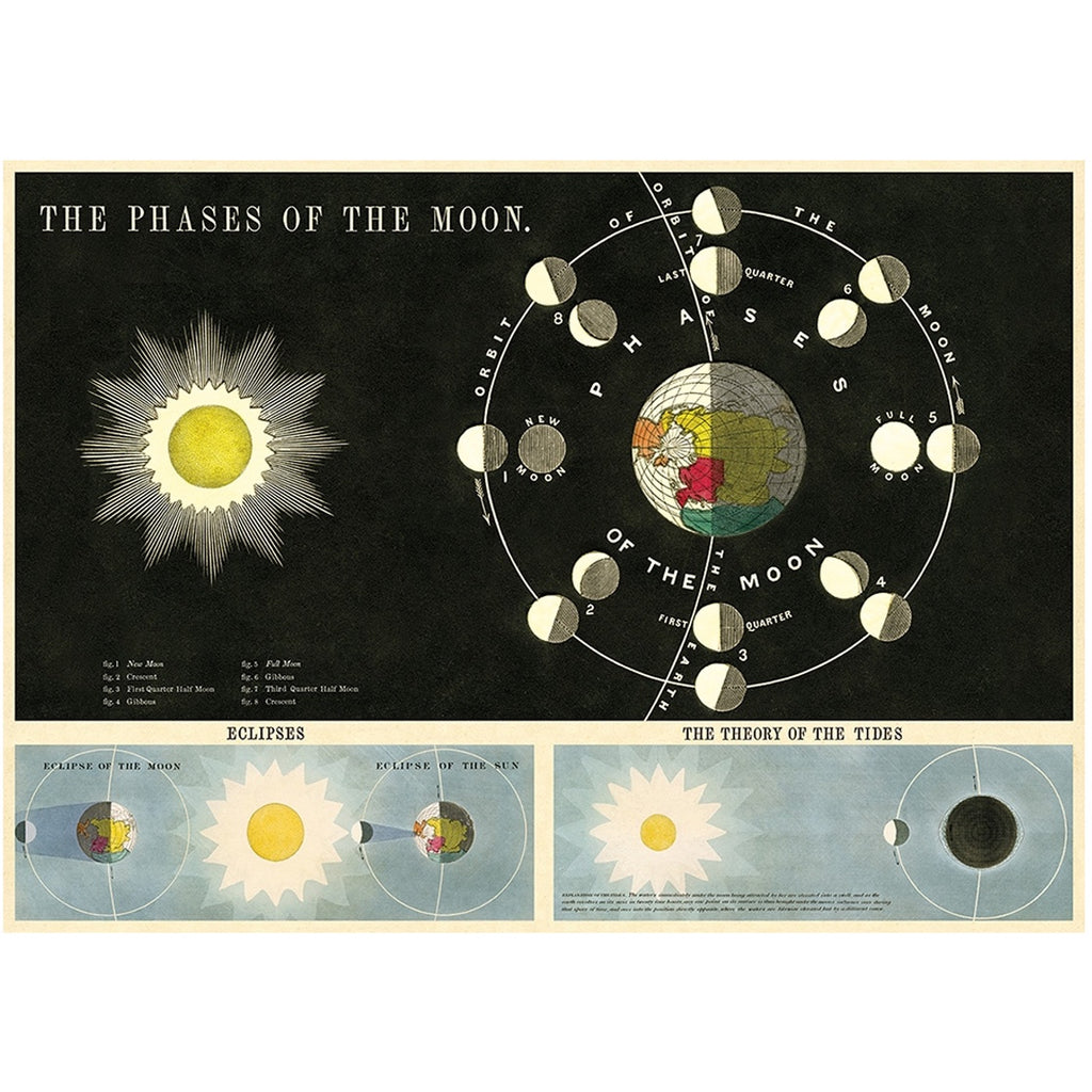 Phases of the Moon Vintage Print