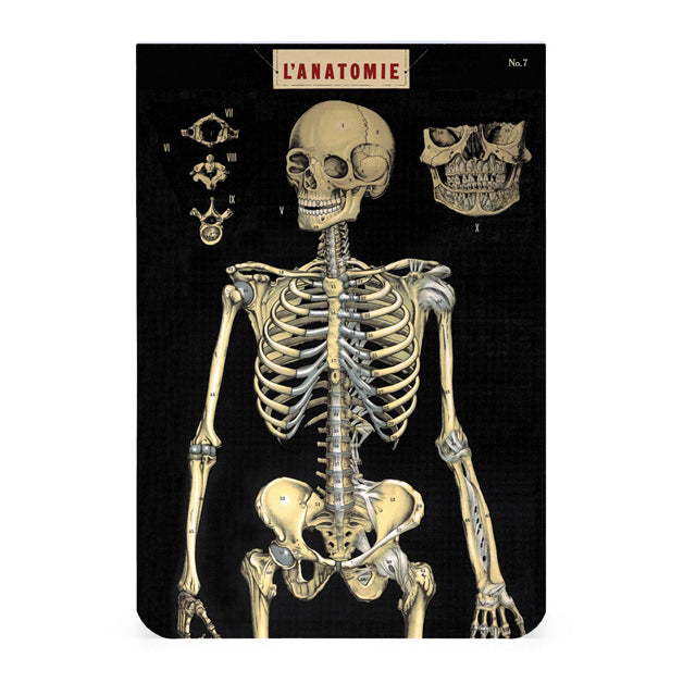 Pocket Notebooks, set of 2 - Anatomy