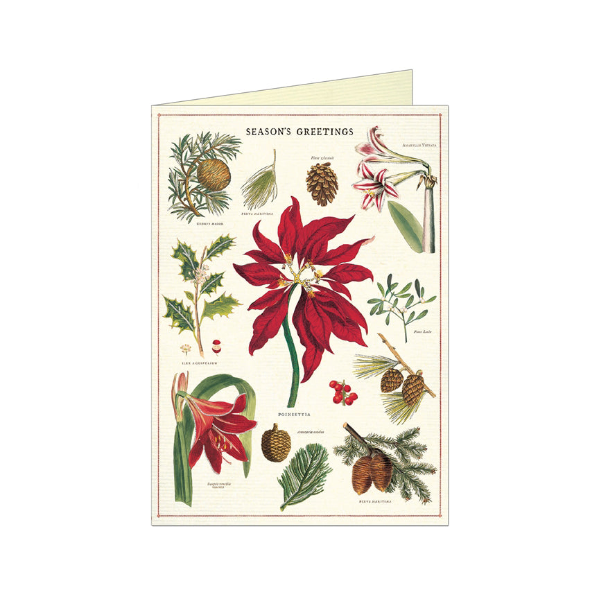 Christmas Botanica Boxed Notes