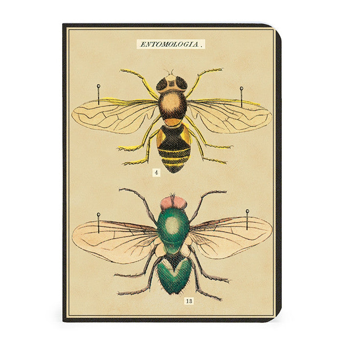 Mini Notebooks, set of 3 - Insects