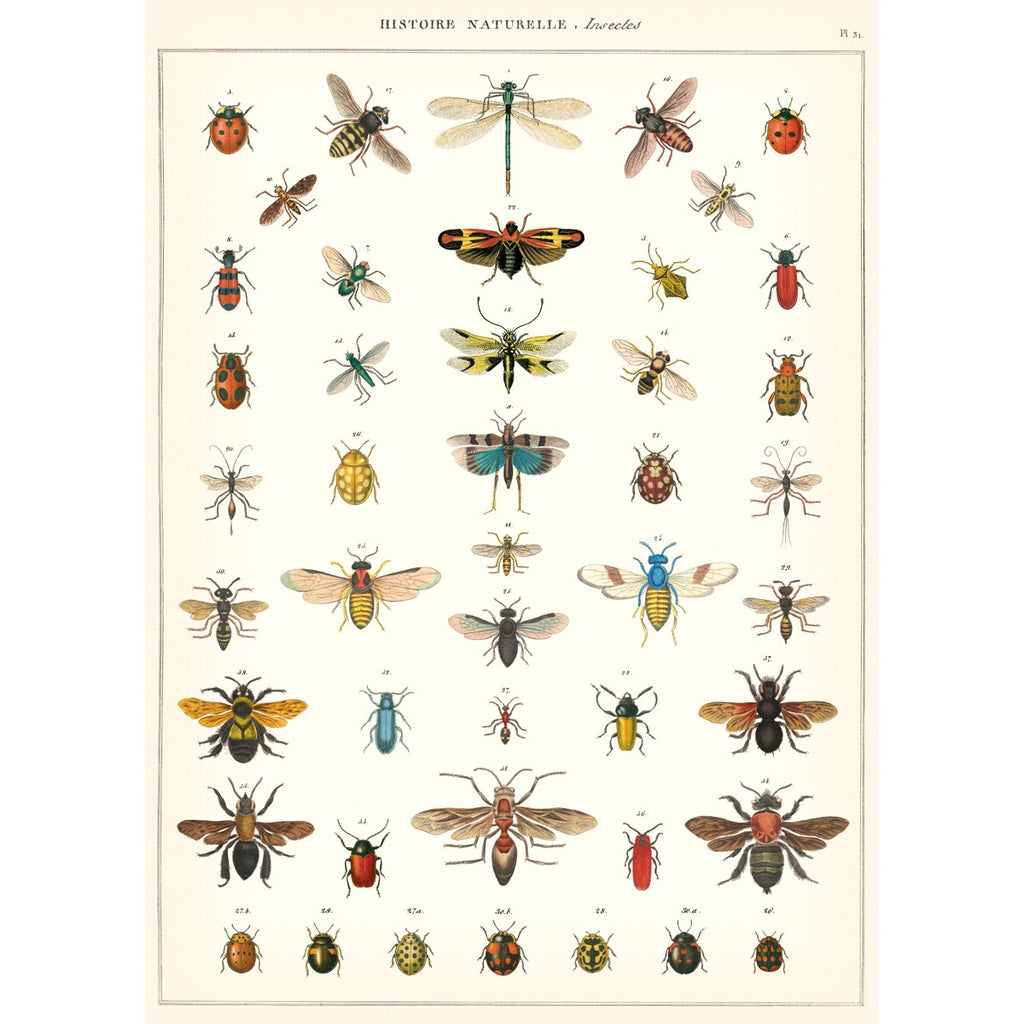 Natural History Insects Vintage Print