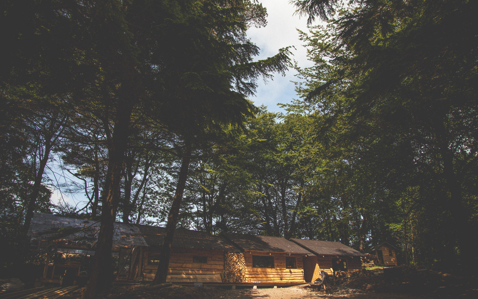The Tom Raffield woodland workshop – a log cabin in the woods.