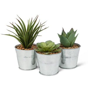 3 succulents in metal pales