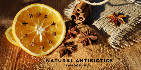 Natural Antibiotics Provided by Nature