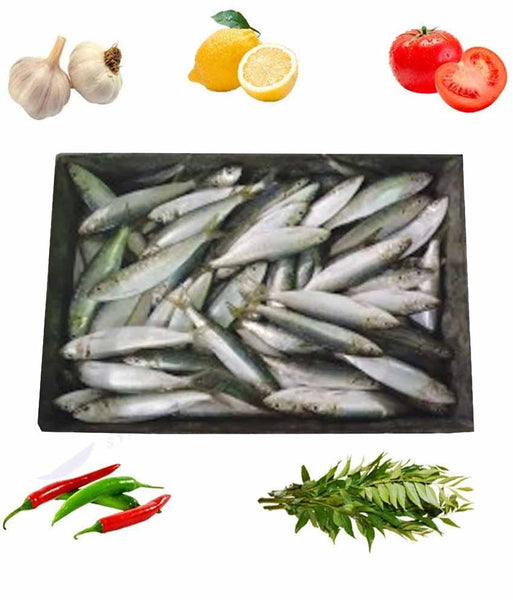 FROZEN SARDINE OMAN 10KG ( WITHOUT CLEANING )