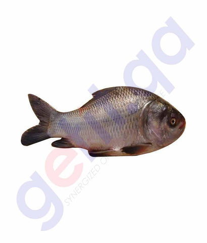 Buy Fresh Catla Fish 500GM, 1KG, 1.5KG, 2KG in Doha Qatar