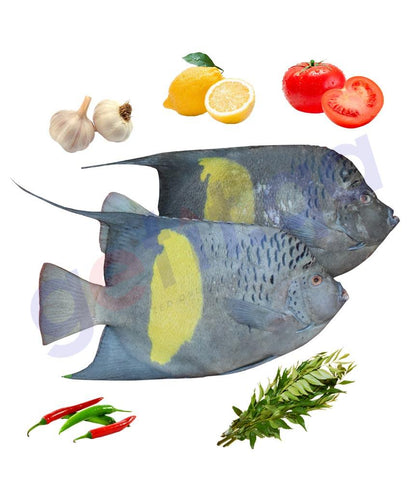 Fresh Fish - ANFOOZ - عنفوز - YELLOW BAR ANGEL FISH