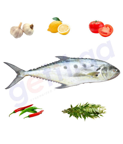 Fresh Fish - DHAL'A - ضلعه - TALANG QUEENFISH WHOLE FISH