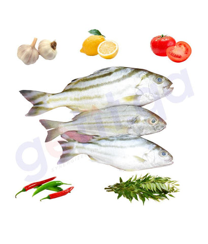 Fresh Fish - DHEEB - ذيب - JARBUA TERAPON  1KG