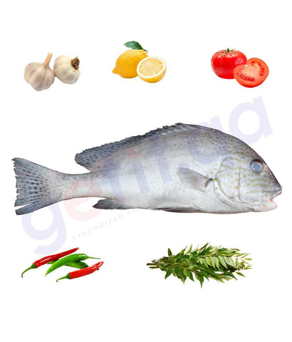 Fresh Fish - FARSH - فرش - PAINTED SWEETLIPS 1KG