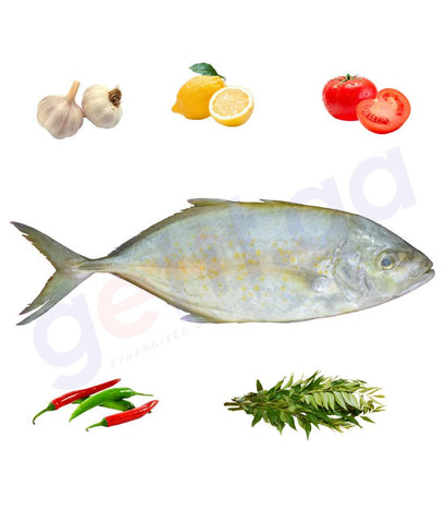 Fresh Fish - JASH - جش - WHITEFIN TRAVALLY (Medium) WHOLE FISH