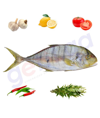 Fresh Fish - RABEEB (Medium) - ربيب - GOLDTOOTHLESS TREAVALLY ( WHOLE FISH )