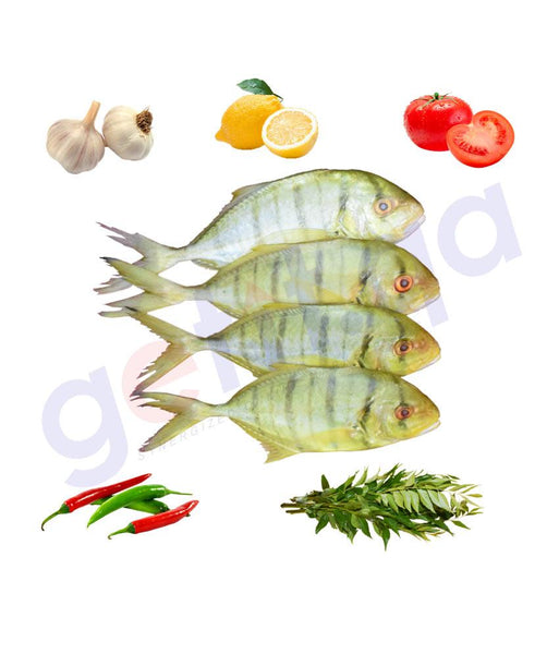 Fresh Fish - RABEEB (Small) - ربيب - GOLDTOOTHLESS TREAVALLY  ( 1KG )