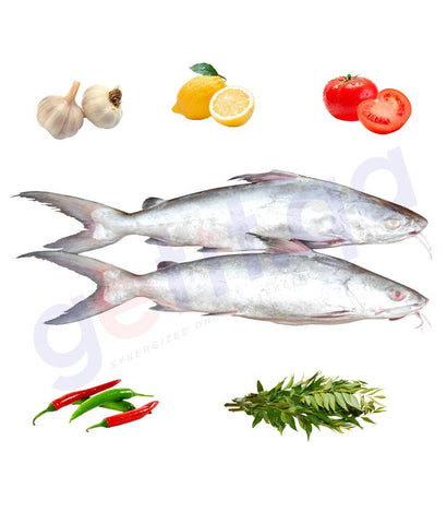Fresh Fish - SHIM - شم - GIANT SEA CATFISH 1KG