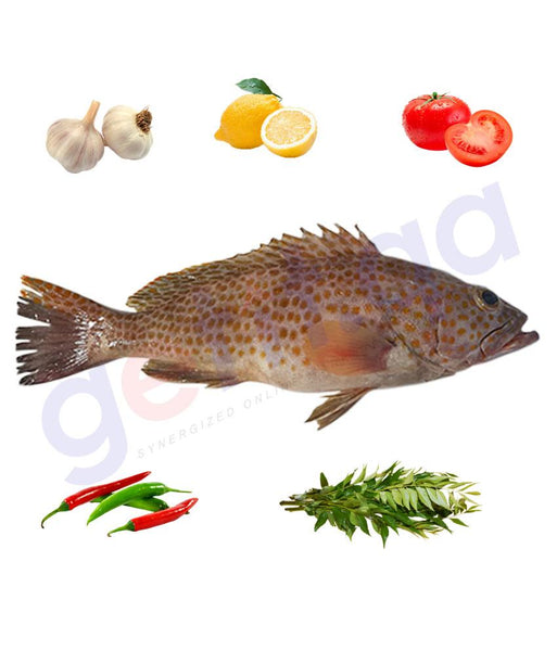 Fresh Fish - SUMMAN - سمان - SMALLSCALE GROUPER  - SMALL