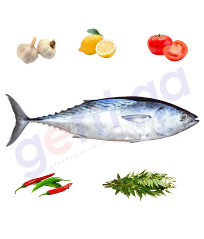 Fresh Fish - TABBAN - تبان - TUNA - BIG(5kg Above)