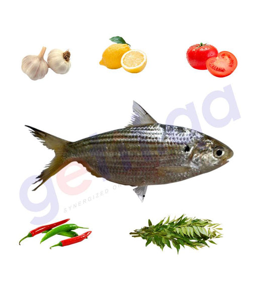 Fresh Fish - YOUAF - يواف - CHACUNDA GIZZARD