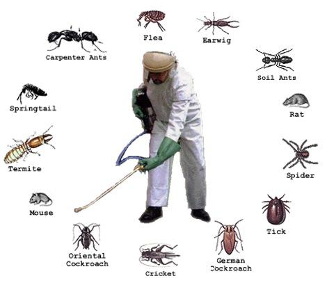 Test - Request For Free Quote- Pest Control Service