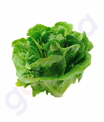 Vegetables - Lettuce 500 Gm