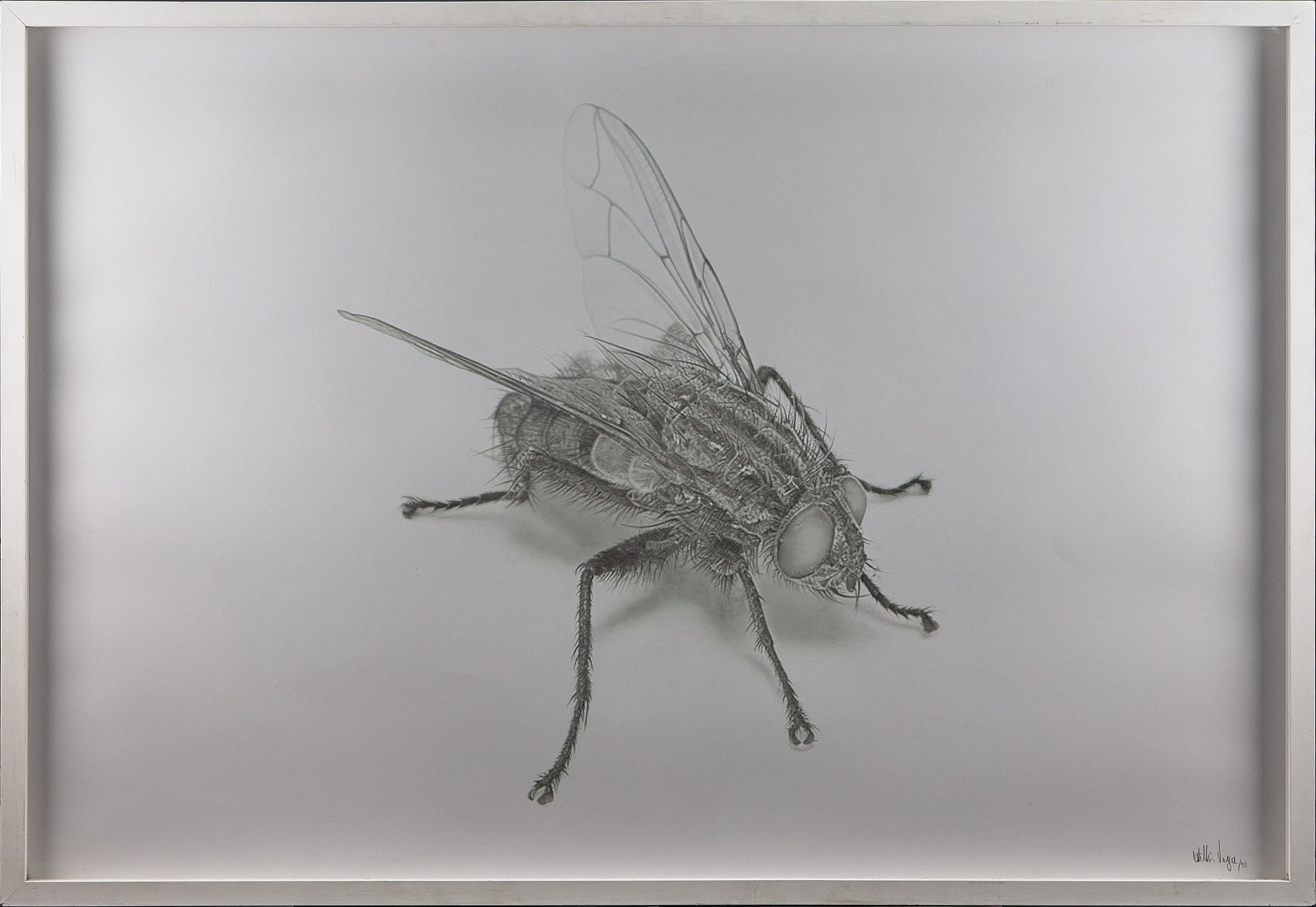 Willis Vega Hyperrealist Fly Drawing