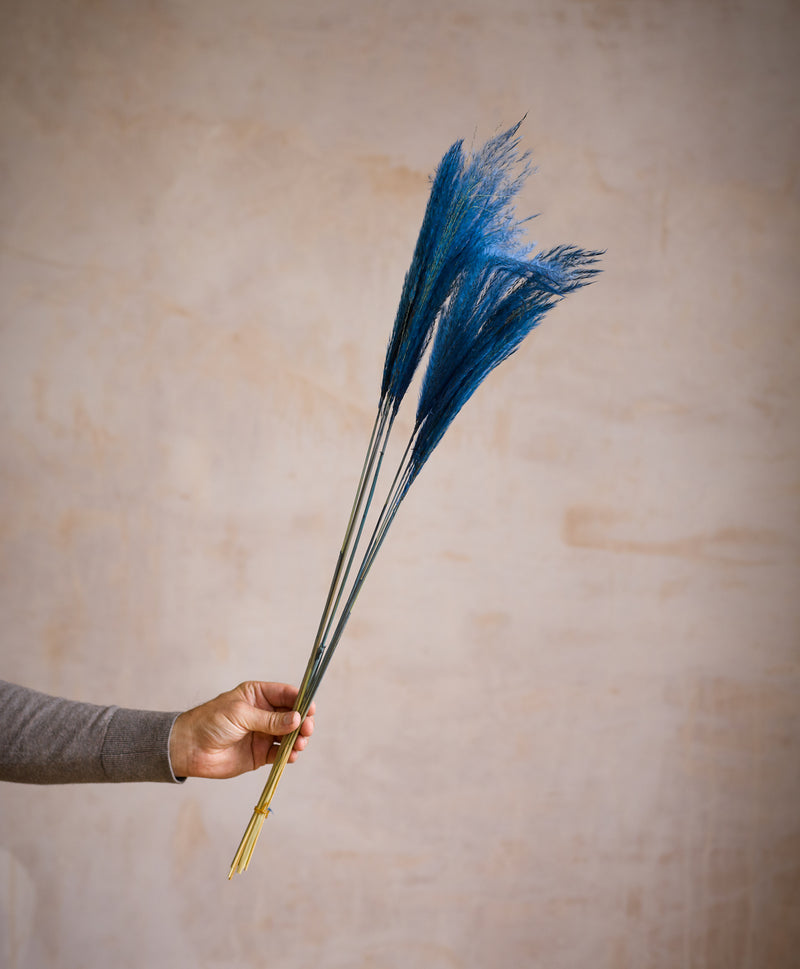 Dried Stipa Feather Blue