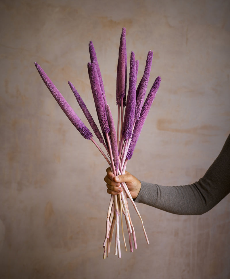 Dried Babala Purple