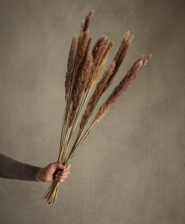 Dried Fluffy Pampas Natural