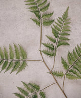 Fox Flowers Fern Light Green