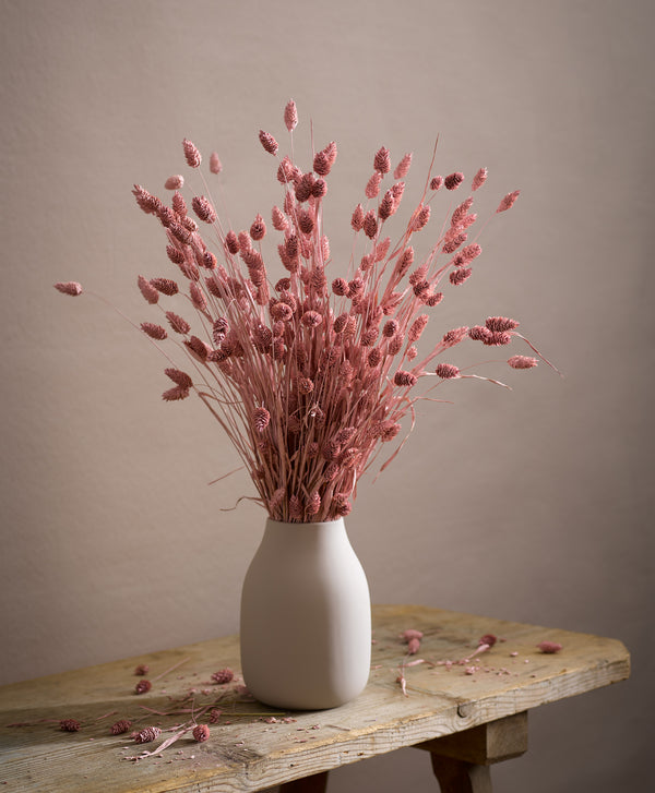 Dried Phalaris Pink