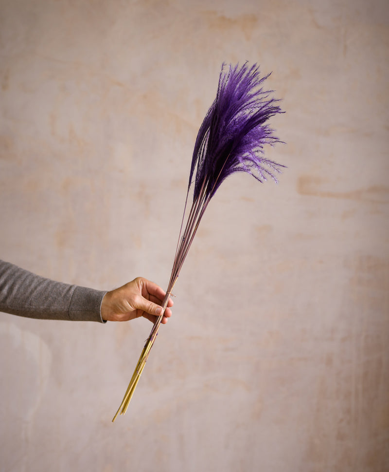 Dried Stipa Feather Purple