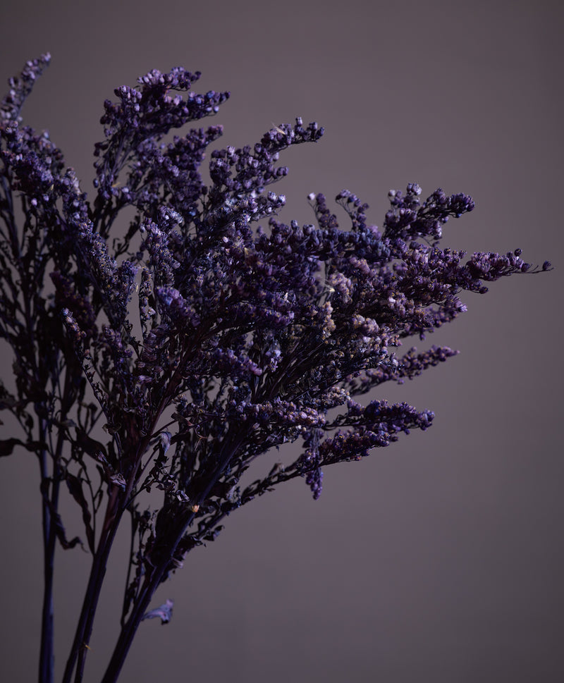 Dried Solidago Purple