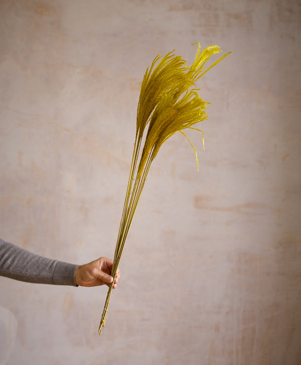 Dried Stipa Feather Yellow