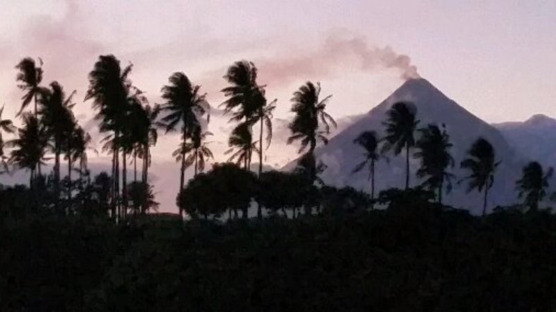 Volcanic ash from Mt Mayon makes the soil rich for pili nut trees. Picture from Jason Thomas, Founder of Pili Hunters