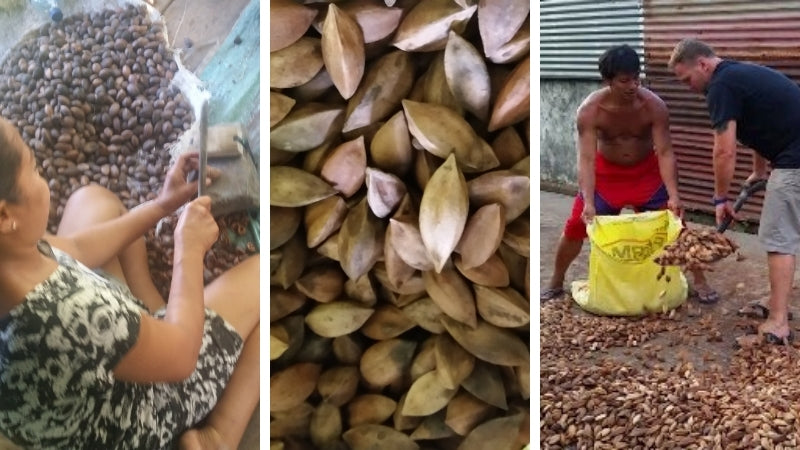 Pili nut harvesting is labor intensive so Pili Hunters ensures fair labor practices are in place
