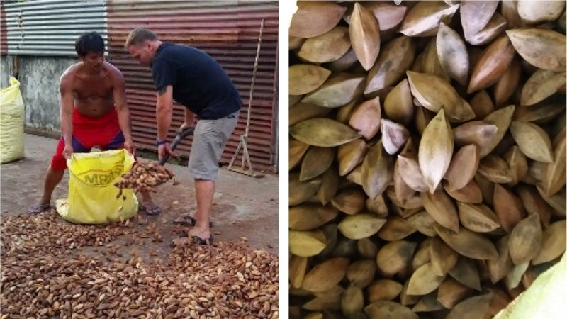 Jason Thomas, CEO of Pili Hunters, is involved in all aspects of the pili nut supply chain