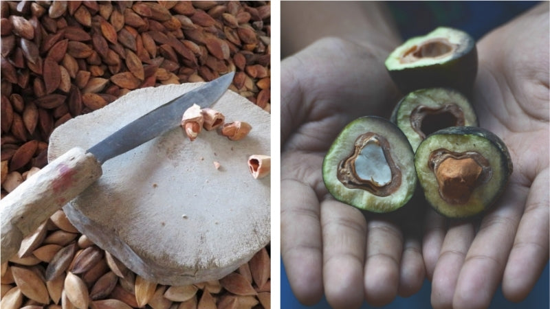 Pili Hunters pili nuts are harvested with a machete
