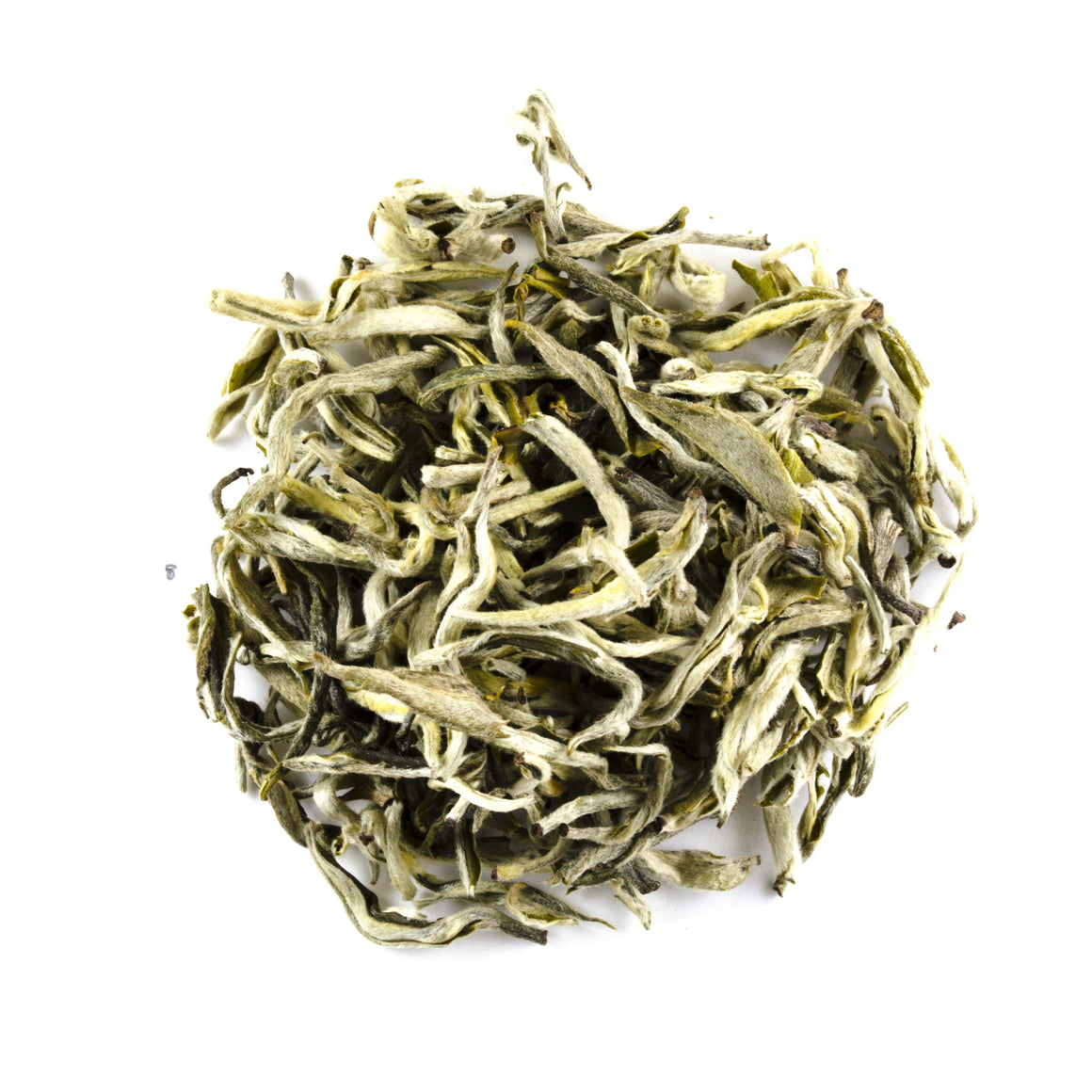 Snow Sprouting - Todd & Holland Tea Merchants