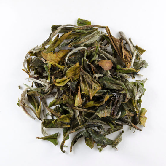 White Peony Supreme - Todd & Holland Tea Merchants