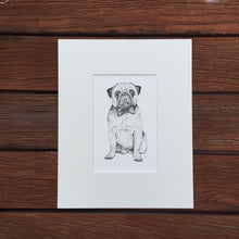Pug breed dog portrait fine art print