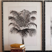 A Little Morocco Plantation Palms Framed Print Set A