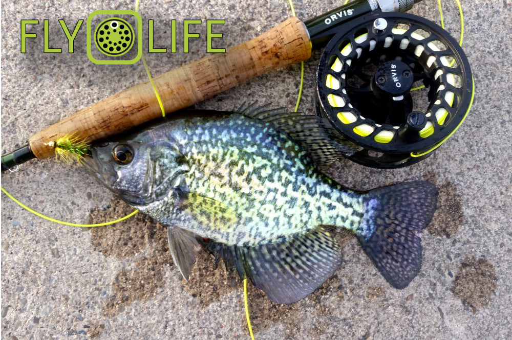 Crappie.... The next big fly rod fish?