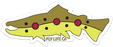 Brown Trout Bumper Sticker