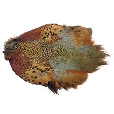 Ringneck Pheasant Skin - Without Tail