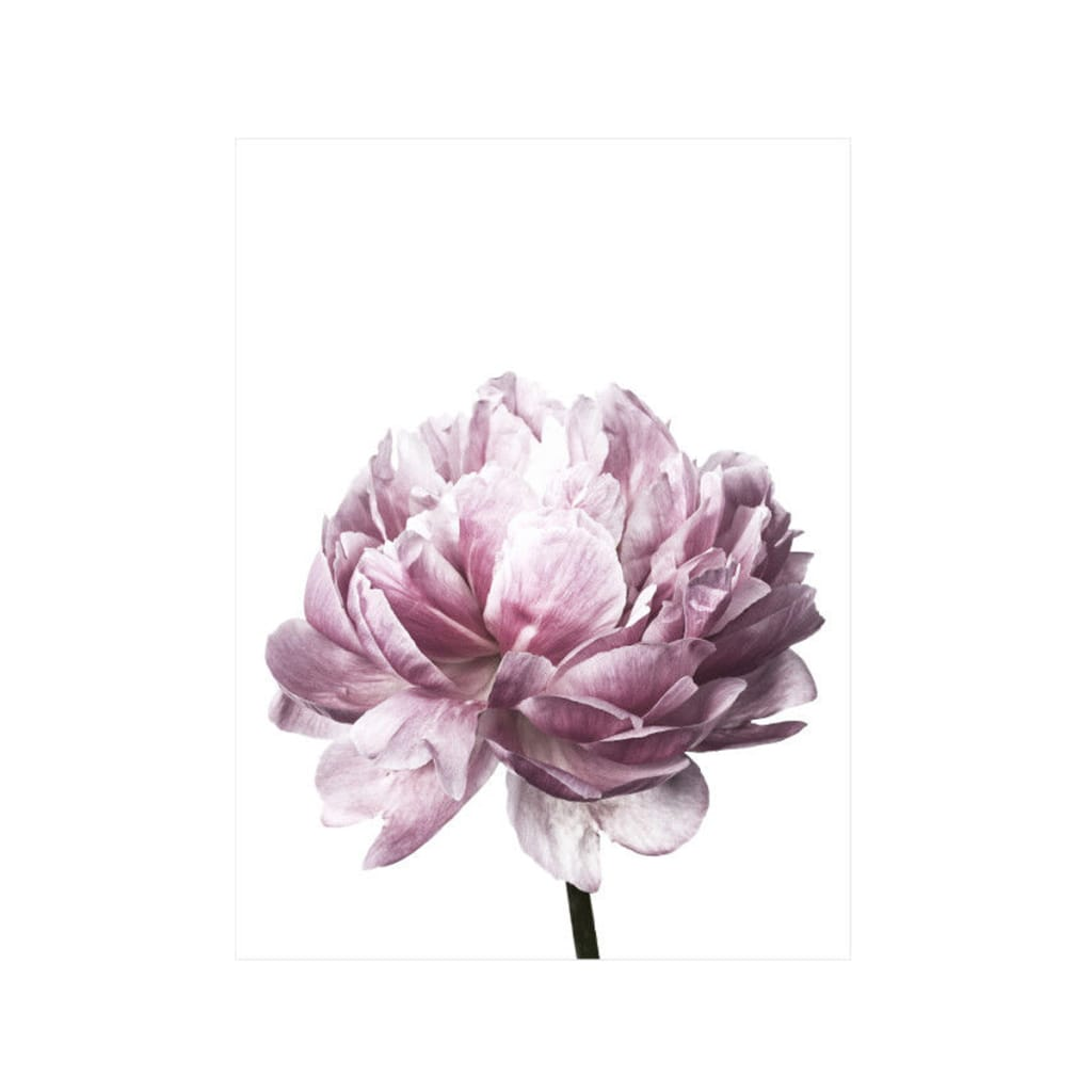 2 Size Home Decor Flower Canvas Poster Wall Art Prints