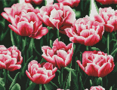 Kaiser Sparkle Kits 440x340mm - TULIPS