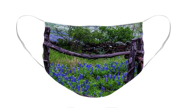 Bluebonnets Framed