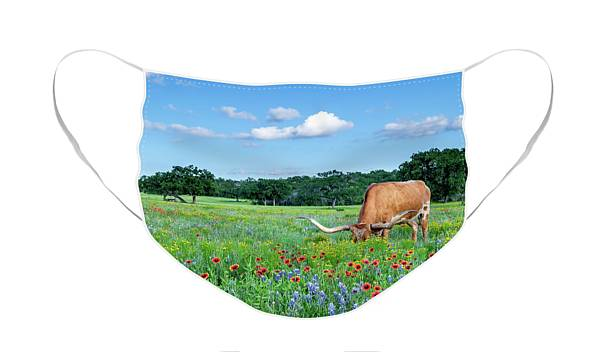 Longhorn In Bluebonnets