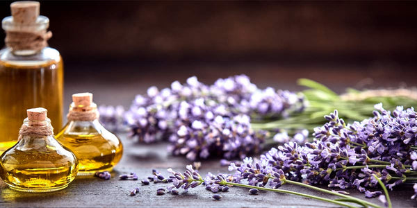 Bible! You'll Need These Essential Oils.