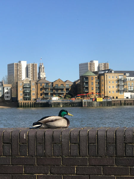 The COVID chronicles - March 21 - a calm duck and a bustling food market